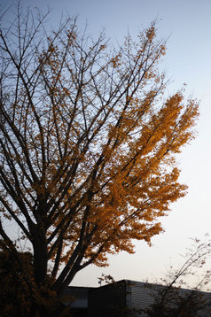 Photo20071204