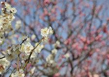 Photo20080225_no01_3