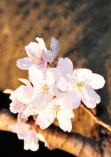 Photo20080406_no01
