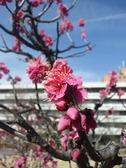Photo20110219_no01