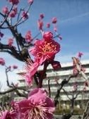 Photo20110219_no02