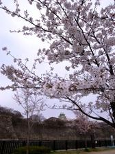 Photo20110407no01