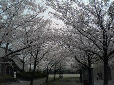 Photo20070408_no01