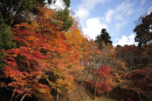 Photo20081130_no05